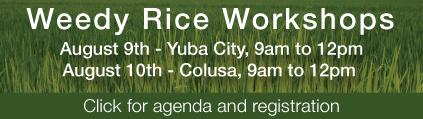 weedy-rice-workshops-coming-up